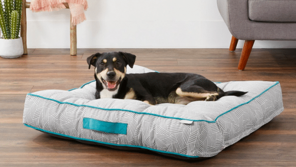 Affordable Dog Beds: 15 Dog Beds that Won't Break the Bank