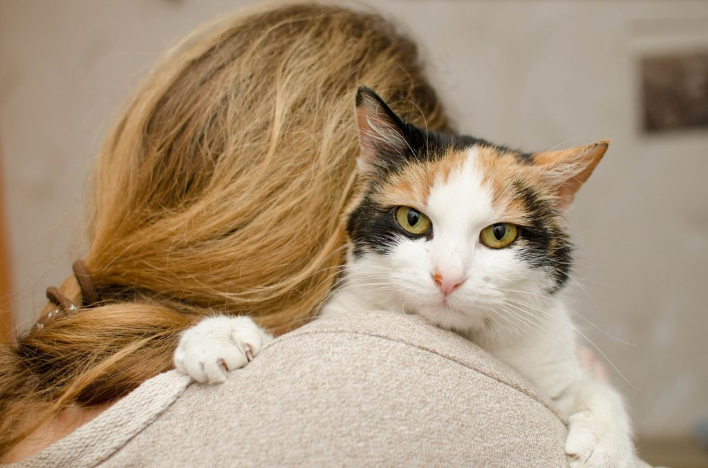 9 Most Affectionate Cat Breeds: Meet the Cuddliest Cats in the World