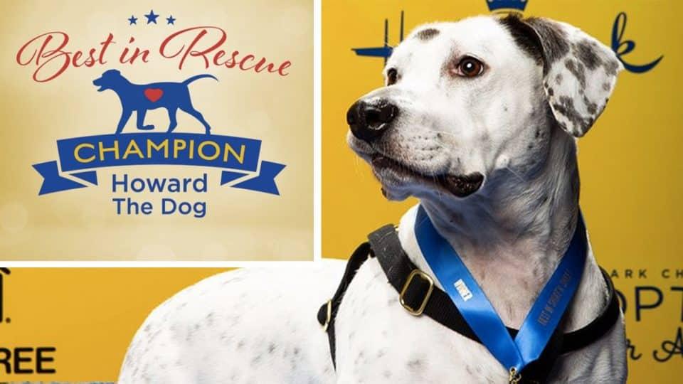 american rescue dog show winner howard