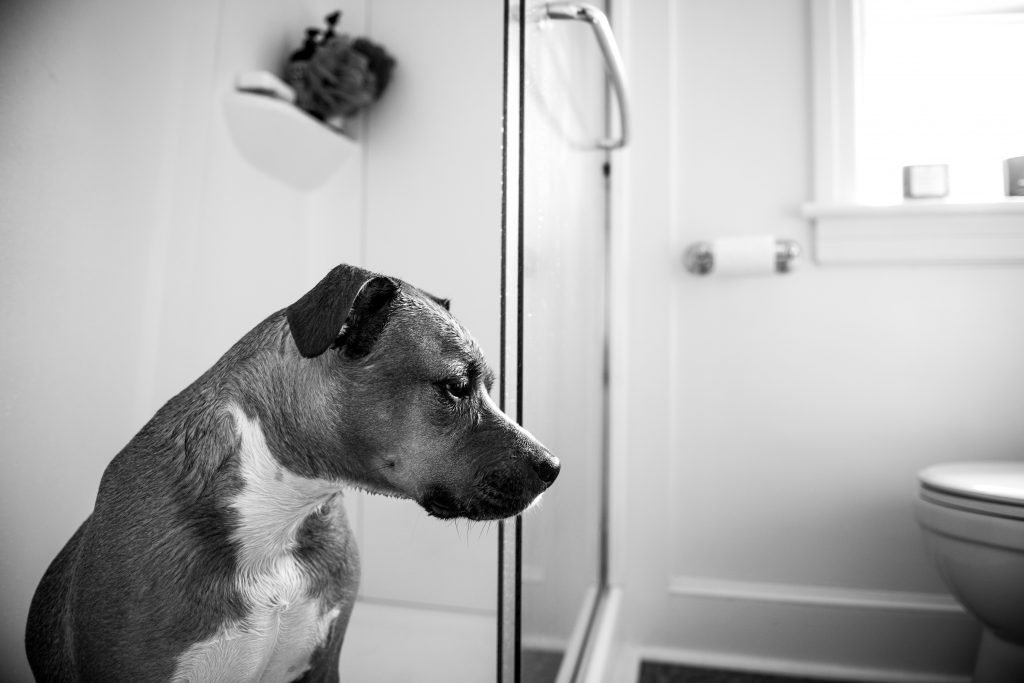 Why Do Dogs Follow You into the Bathroom? | The Dog People ...