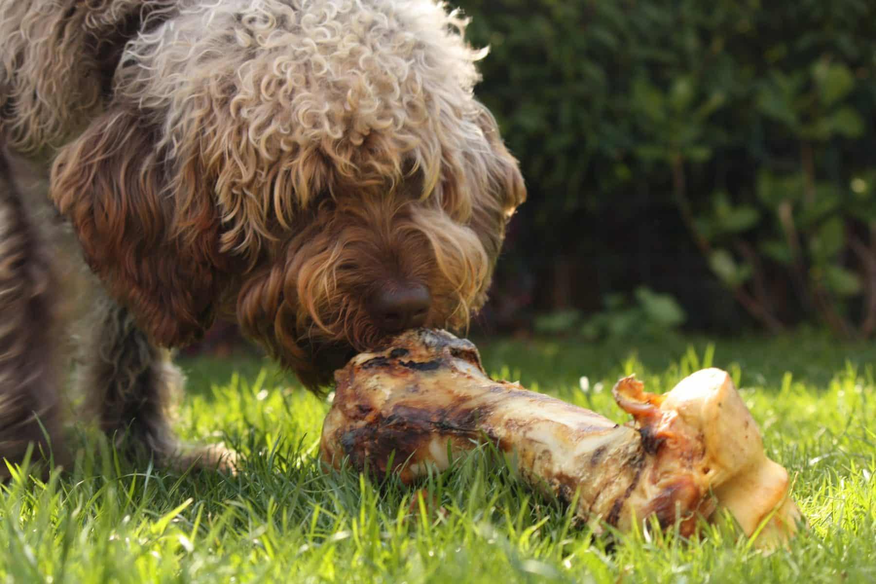 Raw Dog Food   10 Best Affordable Raw Dog Food Options