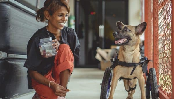 Paralyzed Street Dog Gets Wheelchair and Forever Home in Incredible Journey Captured on Video