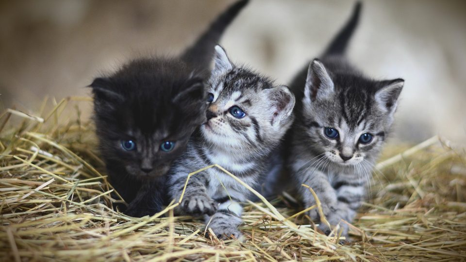 The 131 Most Popular Female Cat Names for 2019