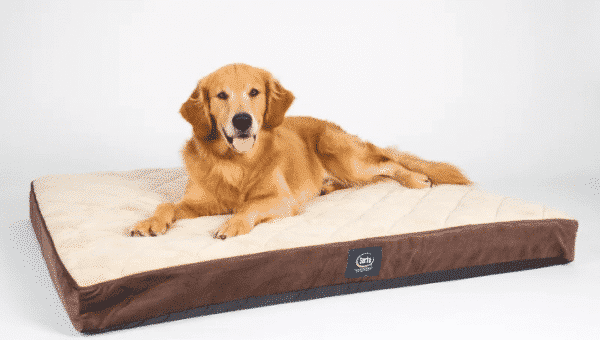 Affordable Dog Beds: 11 Dog Beds that Won't Break the Bank