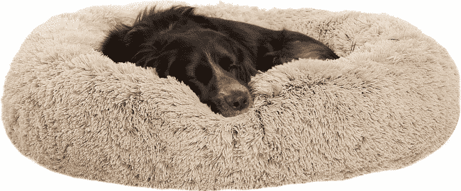 dog sleeping in Best Friends by Sheri donut dog bed