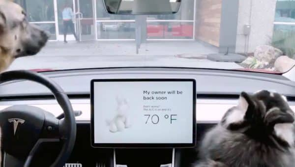 Tesla Introduces Special Safety Features Just for Dogs