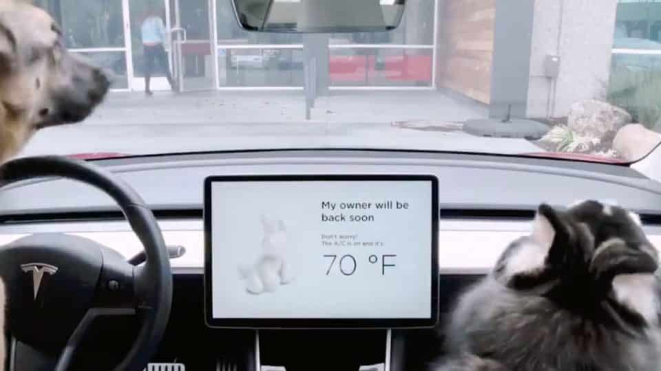 https://www.rover.com/blog/wp-content/uploads/2019/02/tesla-introduces-dog-mode-thanks-to-customer-suggestion-960x540.jpg