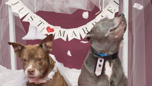 Shelter Throws Wedding for Bonded Dog Couple—All They Need is a Home