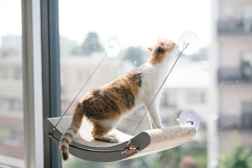 cat on K & H window cradle/scratcher