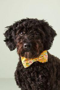 The Foggy Dog Harper bow tie