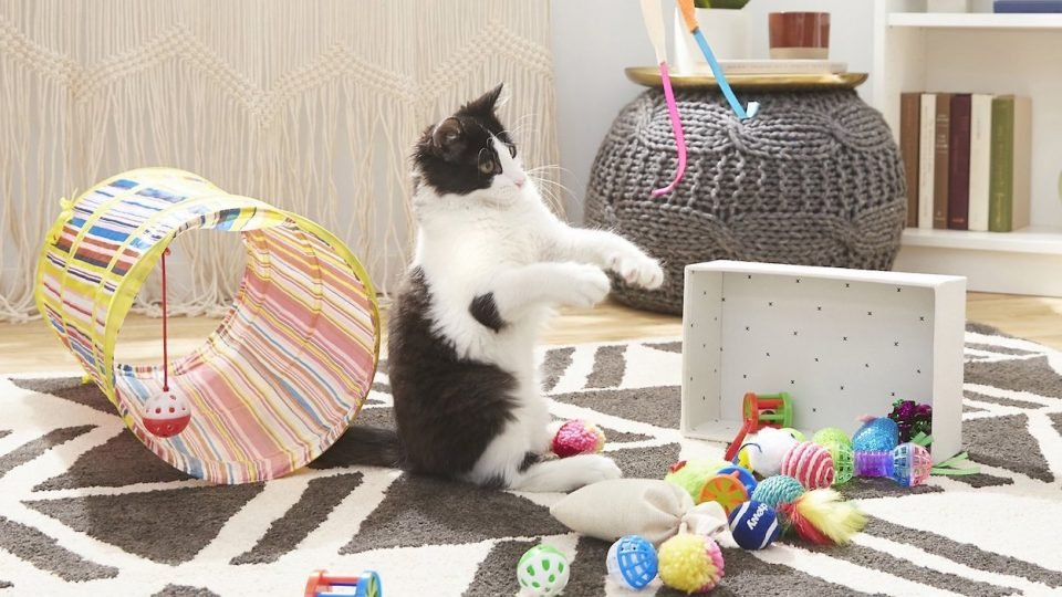 cat playing with variety of cat toys