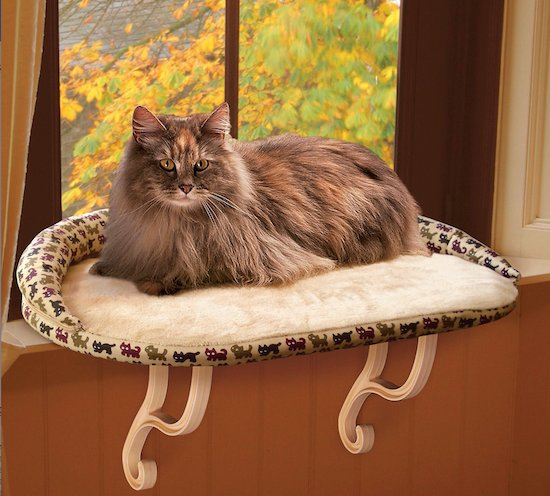cat on cat bed for window