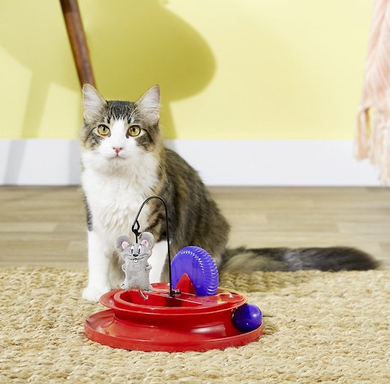 cat with Kong Cat Playground puzzle toy