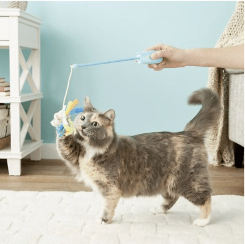 cat playing with SmartyKat laser and wand