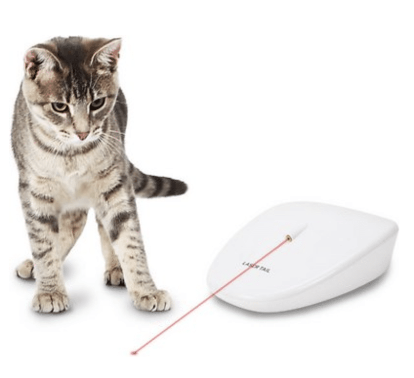 cat with PetSafe toy