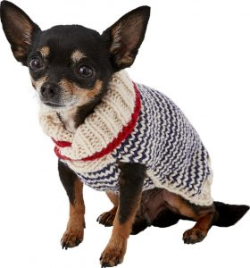 Chilly Dog Spencer striped puppy sweater