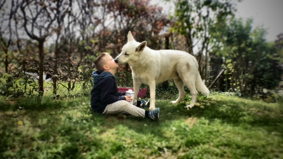 7 Surprising Ways that Dogs Show Affection | The Dog People
