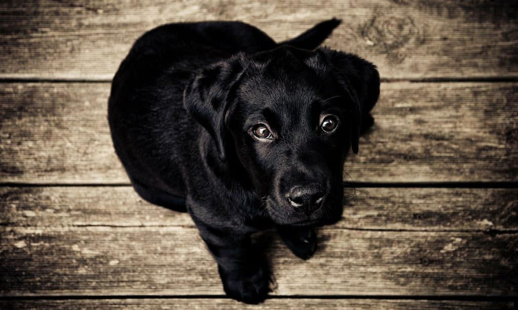This Might Be The Reason Your Dog Gets The Hiccups The Dog People