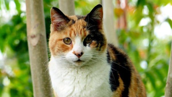 119 Best Calico Cat Names for 2019 with Rankings