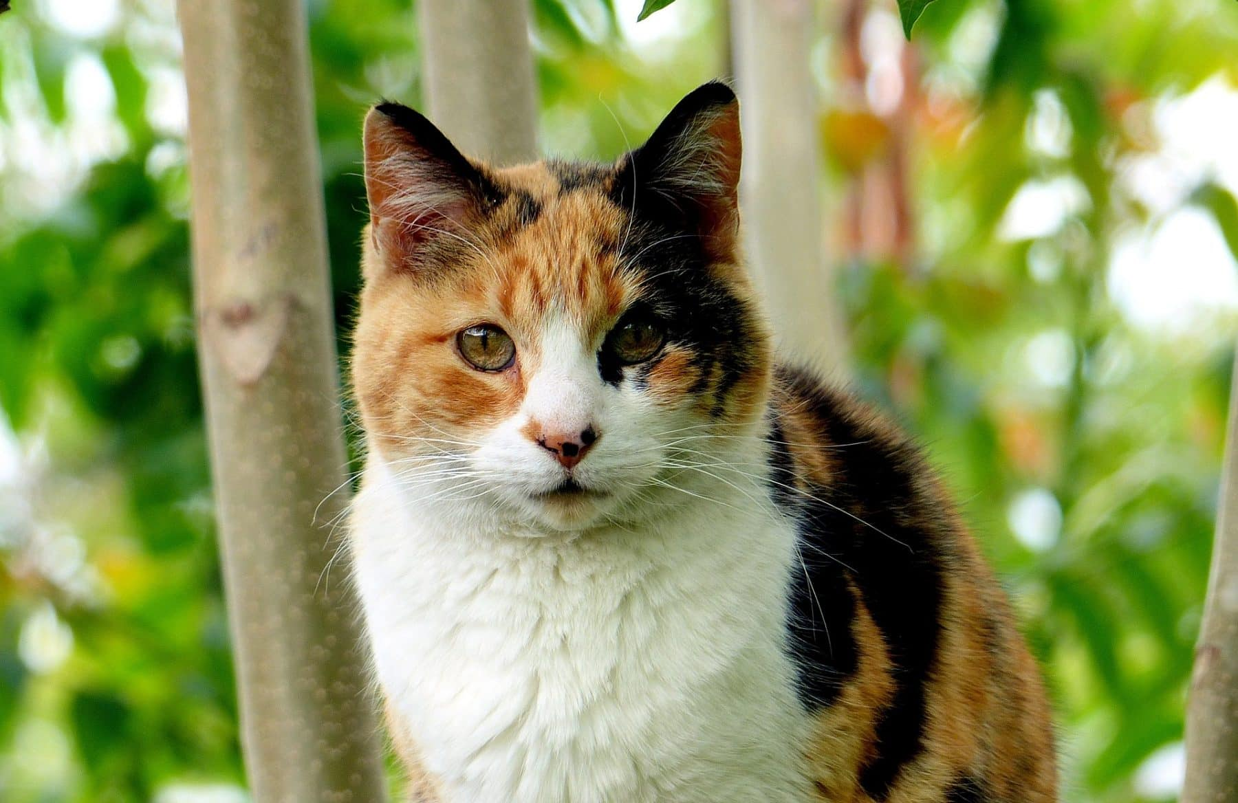 119 Best Calico Cat Names For 2020 With Rankings The Dog People By Rover Com