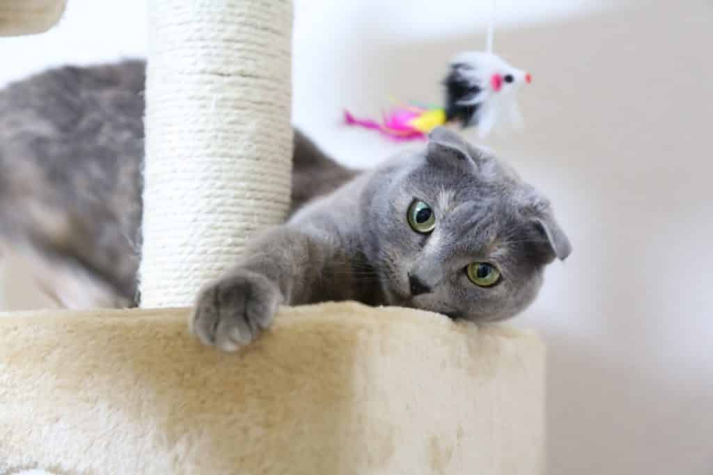 115 Best Gray Cat Names in 2019 for Your Silver, Blue, or
