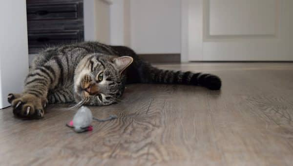 8 Best Catnip Toys for 2019: Wild Purring Will Result