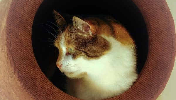 The Best Cave Cat Beds for 2019