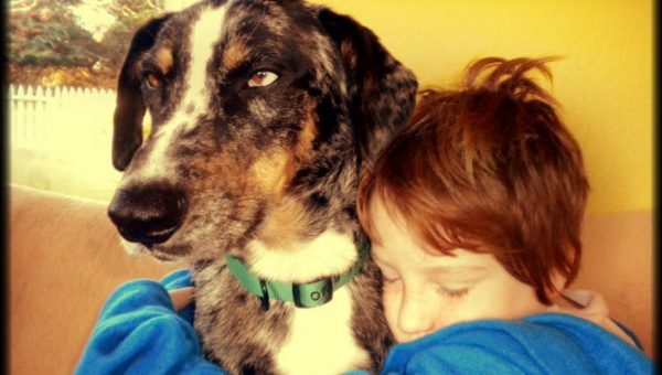 The Cues Dogs Pick Up On to Comfort Their Owners