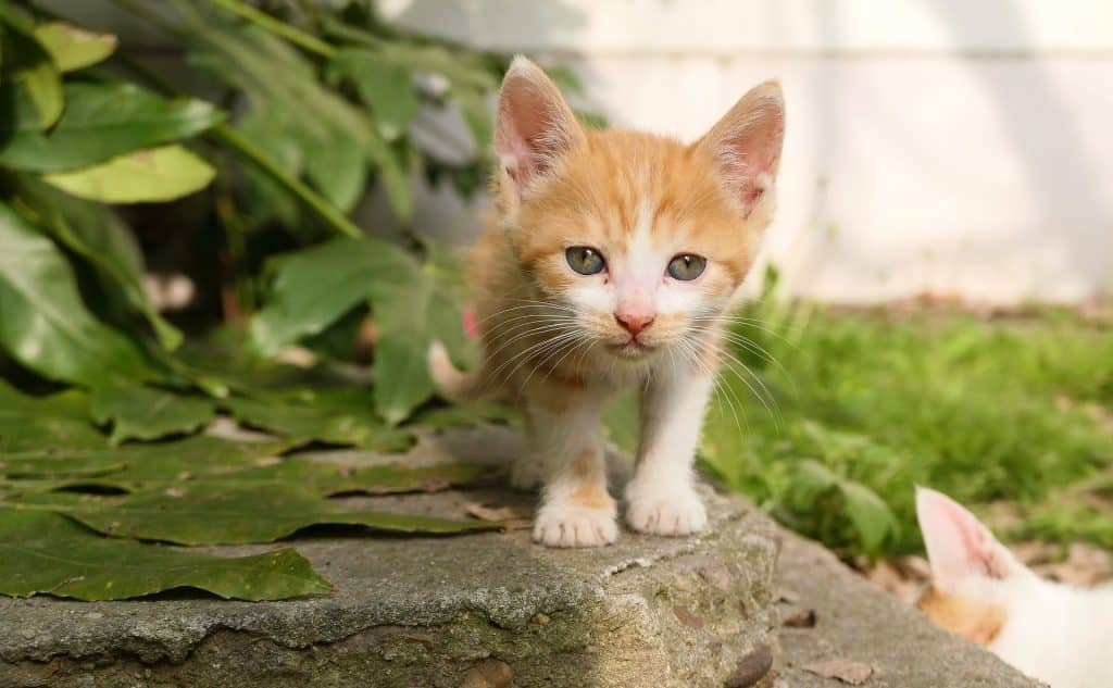 The Top 105 Cat Names That Start With C For 2019 The Dog People By Rover Com