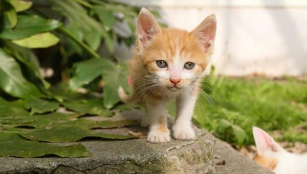 """The Top 105 Cat Names that Start with """"C"""" for 2019"""