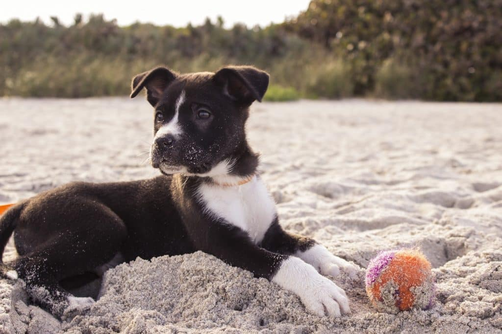 The 163 Best Dog Names that Start with 'J' for 2019 | The Dog People by  Rover.com