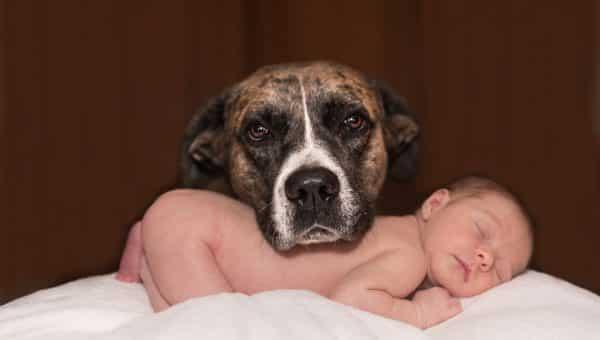 Comment concilier chien et bébé ?