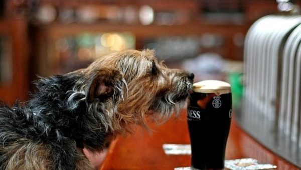 Incredible Irish Dog Names
