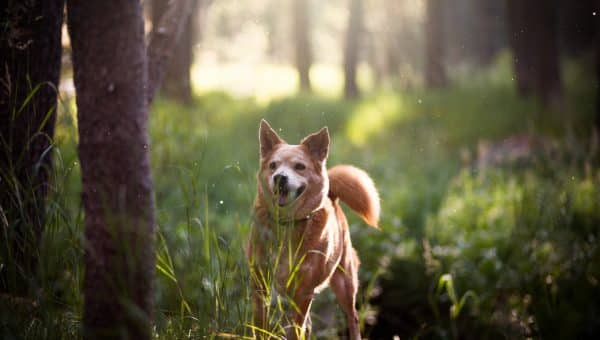 Dogs and Lyme Disease: Everything You Need to Know