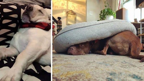 funny broken dogs