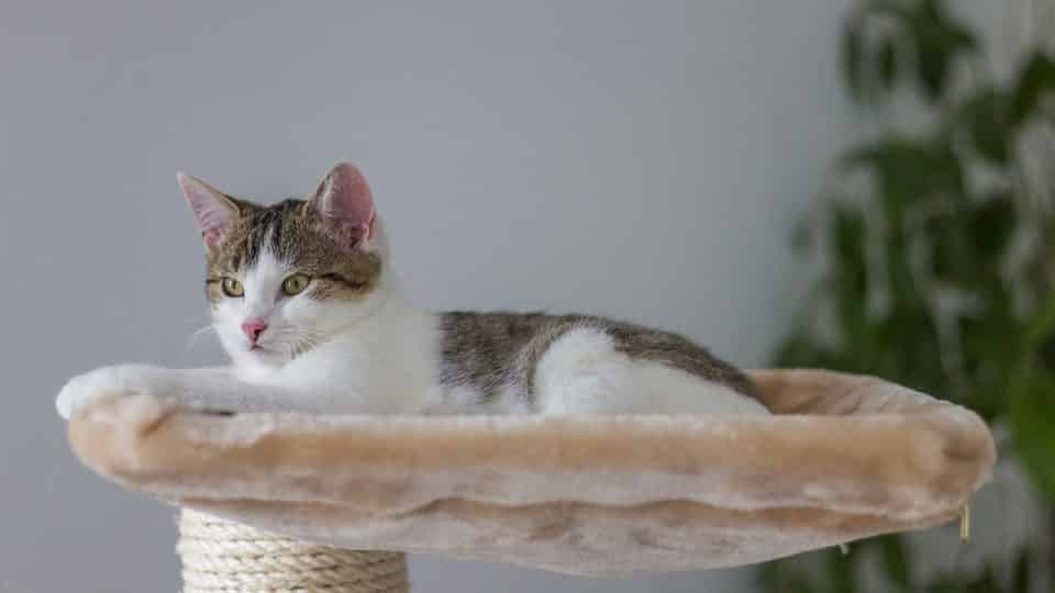 The Best Cat Furniture For 2019 At Every Price Point