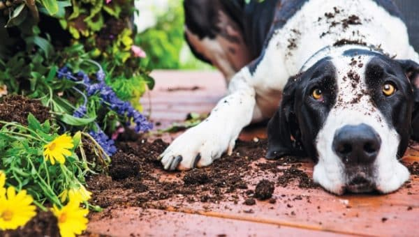 20 Safe Plants for Dogs You Can Add to the Garden Right Now