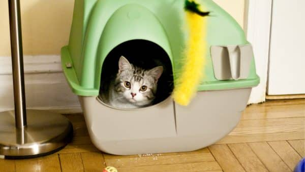 The Truth About Litter Boxes: 7 Best Litter Boxes for Picky Cats