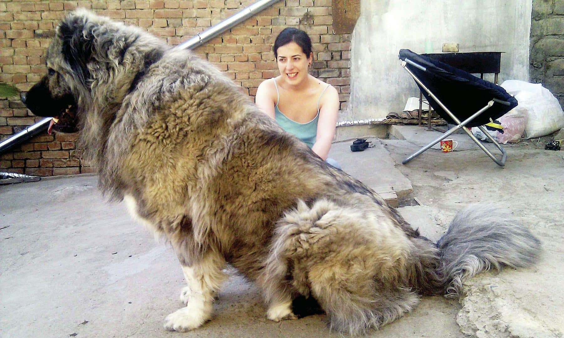 18 Giant Dog Breeds We Love: The World