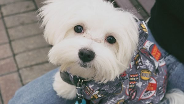 white puppy in outfit