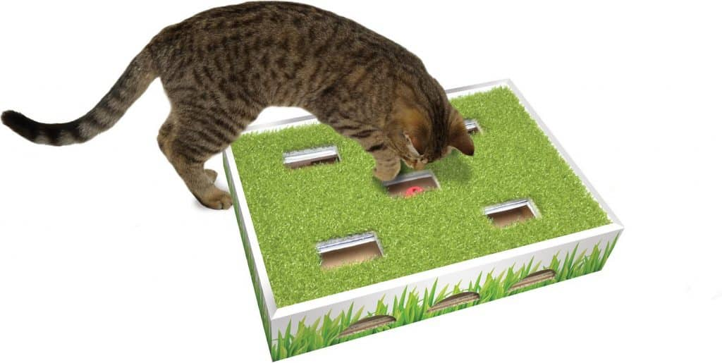 cat playing on grass patch hunting toy