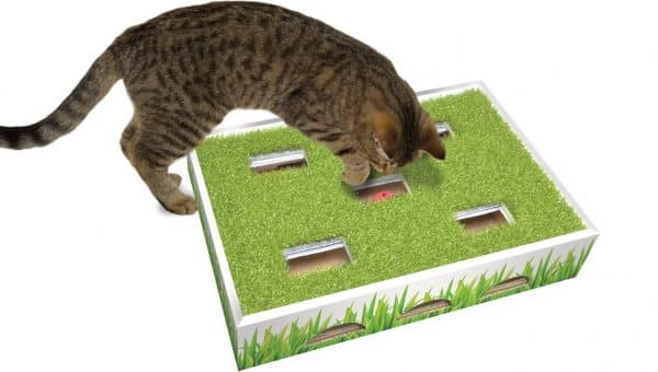 5 Best Cat Puzzle Toys for 2019 (These Really Work)