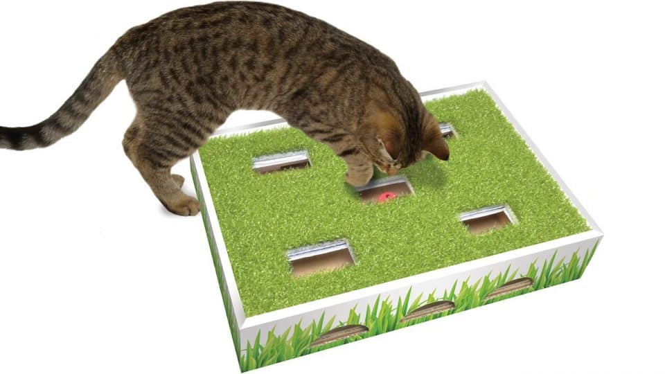 cat playing with cardboard puzzle toy