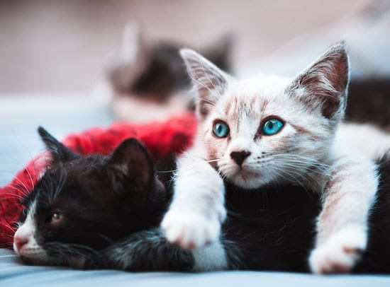 two kittens laying on each other