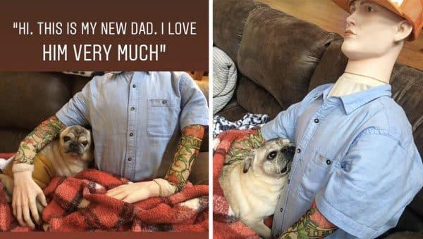 rescue senior pug loves mannequin