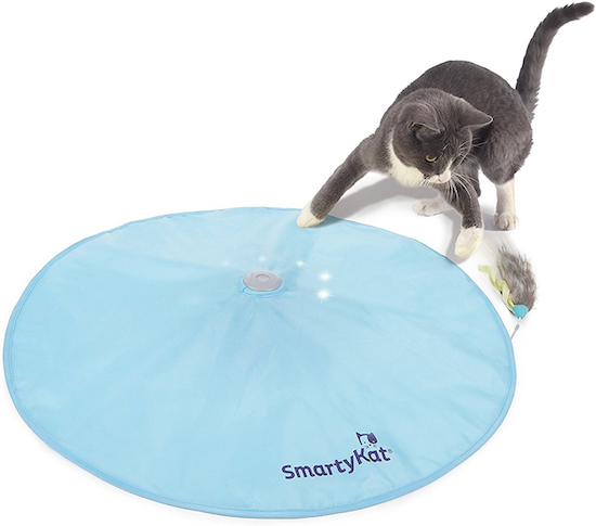 cat with Smartykat toy