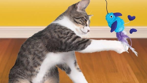 The 7 Best Cat Toys for 2019 According to Cats (and Their People)