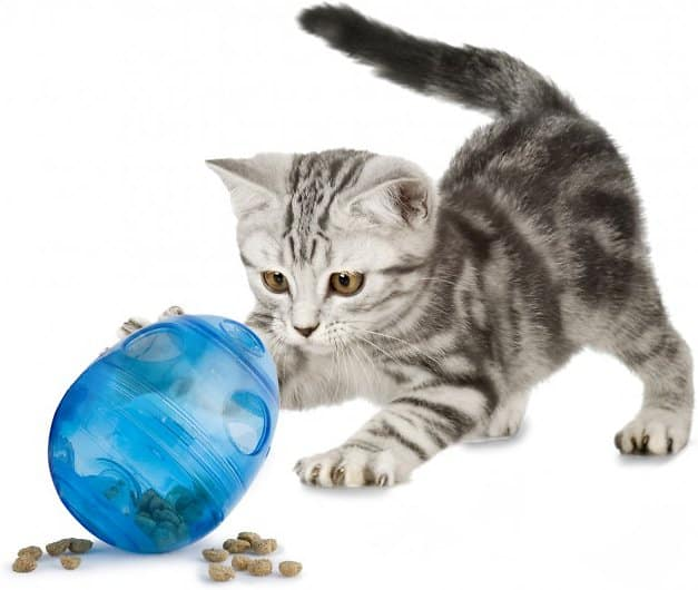 kitten playing with PetSafe egg-shaped treat dispenser