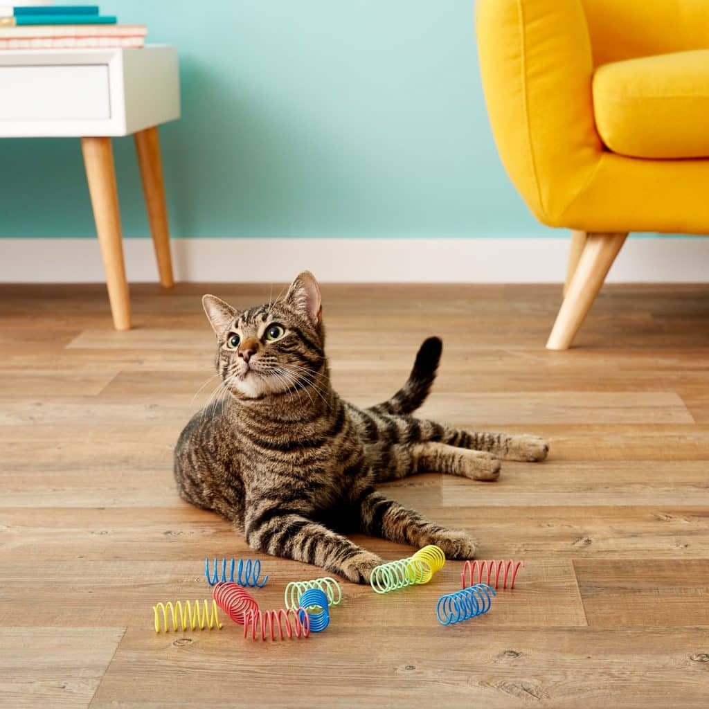 striped cat with Ethical Pet springs