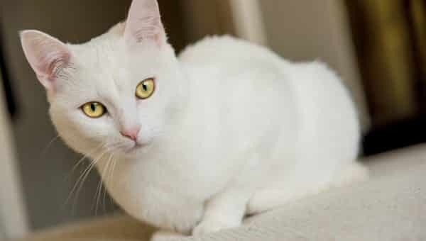 115 Best White Cat Names for 2019